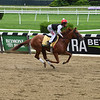 Sir Winston - Belmont Park, June 5, 2019<br /> Coglianese Photos
