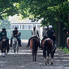 Horses walk the lane to and from the main track during training hours Thursday June 6, 2019 at Belmont Park in Elmont, N.Y.  Photo by Skip Dickstein