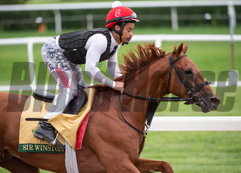 Sir Winston on track at the Belmont Race Course Wednesday June 5, 2019 in Elmont, N.Y. Photo by Skip Dickstein