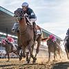 Sir Winston ridden by jockey Joel Rosario wins the 151st running of the Belmont Stakes held Saturday June 8, 2019 at Belmont Park in Elmont, N.Y.