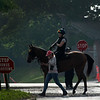 A horse heads to the main track for training Thursday June 6, 2019 at Belmont Park in Elmont, N.Y.  Photo by Skip Dickstein