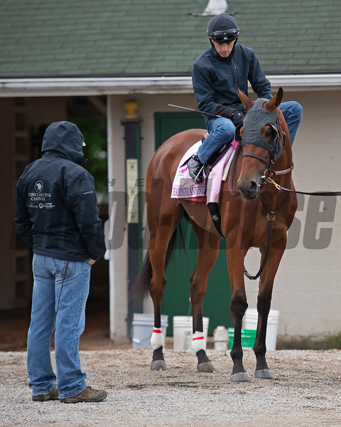 Champagne Anyone with Chris Landeros and trainer Ian Wilkes on left. Morning scenes at Churchill Downs during Derby week, April 28, 2019 in Louisville, Ky. Photo: Anne M. Eberhardt