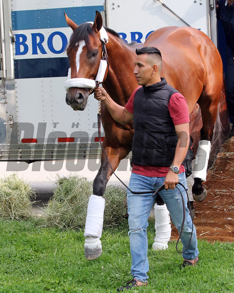 Maximum Security arriving at Churchill Downs on April 30, 2019. Photo By: Chad B. Harmon