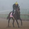 Liora galloping
