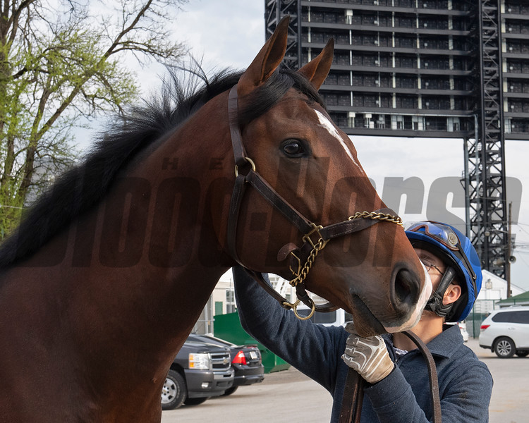 2yo unnamed colt by Declaration of War from Dreaming of Anna (1/2 to Fast Anna). Morning scenes at Churchill Downs during Derby week 2019  April 29, 2019 in Louisville,  Ky.