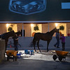 Early morning on the backside at Churchill Downs Wednesday May 1, 2019 in Louisville, KY.<br /> Photo by Skip Dickstein