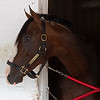 War of Will - Morning - Churchill Downs - 042619. Photo: Anne M. Eberhardt