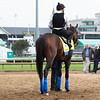 Game Winner heading to the track at Churchill Downs on May 1st, 2019.