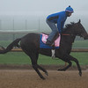 Serengeti Empress galloping