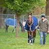 Newspaperofrecord - Morning - Churchill Downs - 042919. Photo: Anne M. Eberhardt