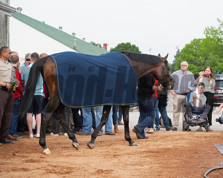 Game Winner comes out for bath. Morning scenes at Churchill Downs during Derby week 2019  April 30, 2019 in Louisville,  Ky.