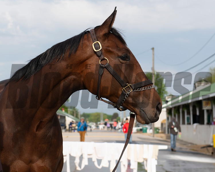 Liora. Morning scenes at Churchill Downs during Derby week 2019  April 29, 2019 in Louisville,  Ky.