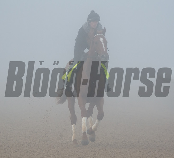 Country House galloping