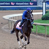 Lady Apple on the track at Churchill Downs on April 30, 2019. Photo By: Chad B. Harmon
