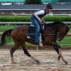 Omaha Beach galloping