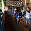 By My Standards - Morning - Churchill Downs - 042619. Photo: Anne M. Eberhardt