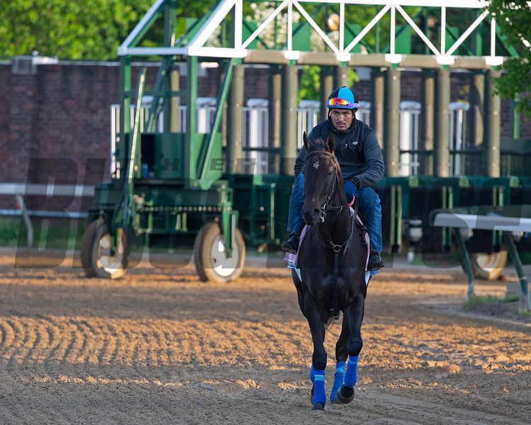 Serengeti Empress. Morning scenes at Churchill Downs during Derby week 2019  April 27, 2019 in Louisville,  Ky. Photo: Anne M. Eberhardt