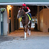 Code of Honor heading to the track at Churchill Downs on April 30, 2019. Photo By: Chad B. Harmon