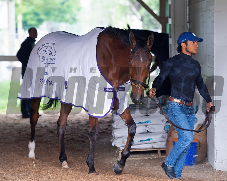 Bellafina. Morning scenes at Churchill Downs during Derby week 2019  April 30, 2019 in Louisville,  Ky.
