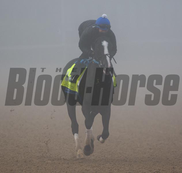 Long Range Toddy galloping