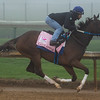 Lady Apple galloping