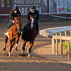 Plus Que Parfait. Morning scenes at Churchill Downs during Derby week 2019  April 27, 2019 in Louisville,  Ky. Photo: Anne M. Eberhardt