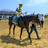 Ickymasho ridden by Jose Ortiz heads to the winner's circle after winning the 1 1/2 mile 10th running of The Ole Smokey Moonshine Searching Stakes Saturday May 18, 2019 at Pimlico Race Course in Baltimore, MD.  Photo by Skip Dickstein.