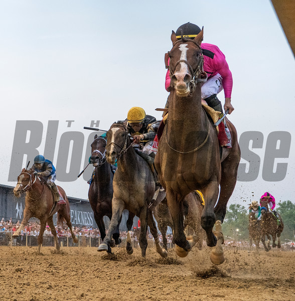 Jockey Tyler Gaffalione guides War of Will up the rail to win  the 144th running of The Preakness Stakes on War of Will Saturday May 8th at Pimlico Race Course in Baltimore, MD.  Photo by