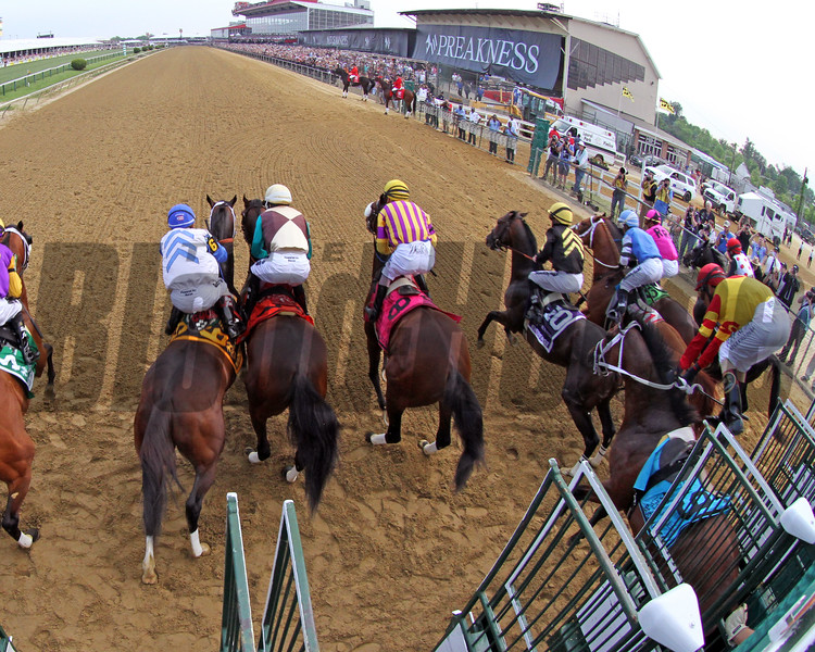Bodexpress and John Velazquez Starting Gate Remote Sequence #1 Photo By: Chad B. Harmon
