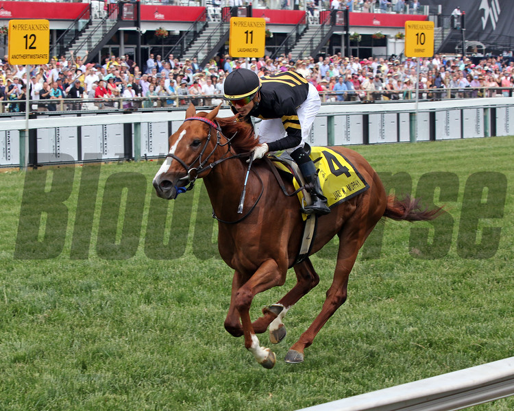English Bee with Jose Ortiz win the 10th Running of The James W. Murphy Stakes at Pimlico on May 18, 2019. Photo By: Chad B. Harmon