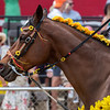 Tassels of brilliant colors flow from the bridle of pony rider on Preakness Stakes Day Saturday May 18, 2019 at Pimlico Race Course in Baltimore, MD.  Photo by Skip Dickstein.