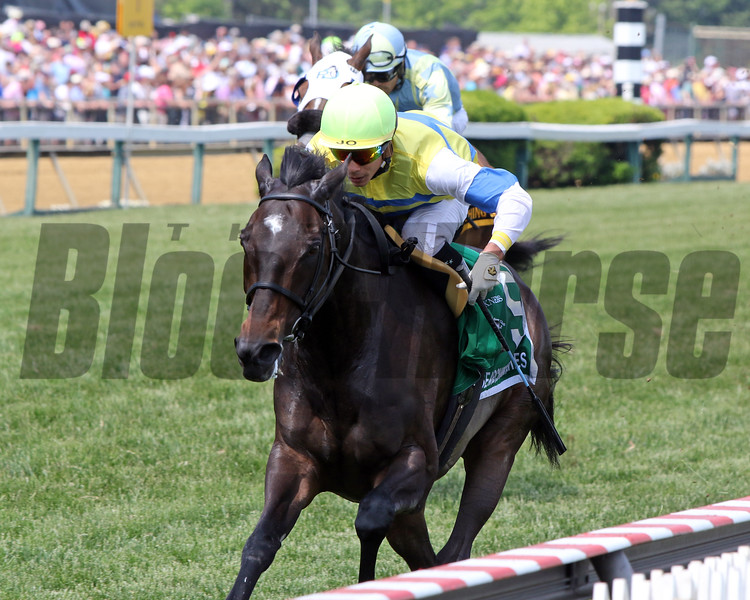 Ickymasho with Jose Ortiz win the 10th Running of the Ole Smokey Moonshine Searching Stakes at Pimlico on May 18, 2019. Photo By: Chad B. Harmon