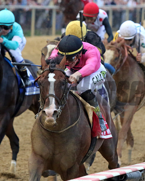 War of Will wins the Preakness Stakes at Pimlico Race Course Saturday, May 18, 2019. Photo: Chad B. Harmon