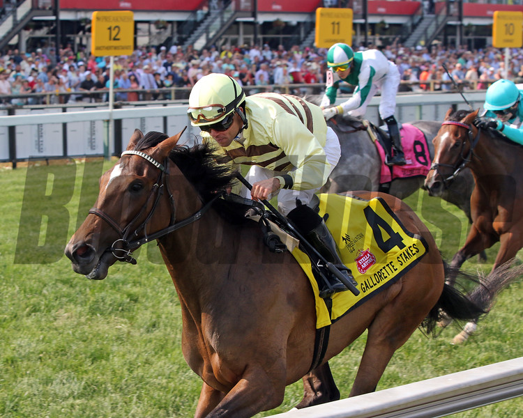 Mitchell Road with Joel Rosario win the 68th Running of the Gallorette Stakes (GIII) at Pimlico on May 18, 2019. Photo By: Chad B. Harmon