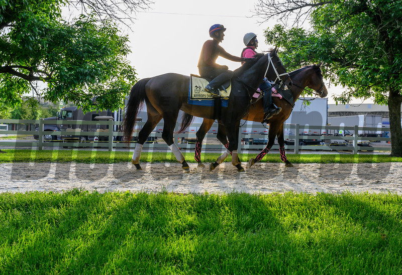 Warriors Charge on his way to the track for a gallop at Pimlico Race Track in preparation for Saturday's Preakness Stakes Friday May 17, 2019 in Baltimore, MD.  Photo by Skip Dickstein
