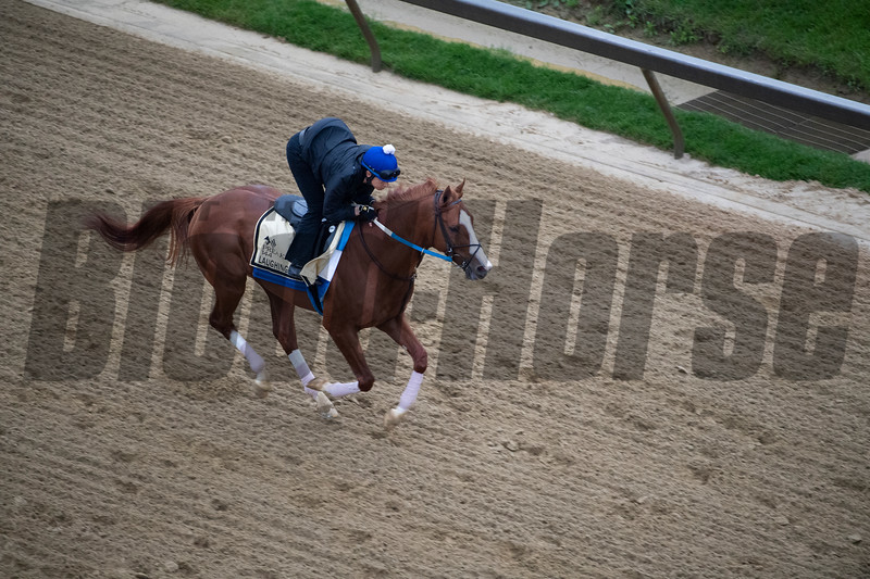 Laughing Fox out his morning exercise at the Pimlico Race Course Thursday May 16, 2019 in Baltimore,MD.  Photo by Skip Dickstein