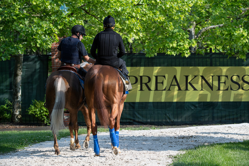 Improbable goes out for his morning exercise at the Pimlico Race Course Thursday May 16, 2019 in Baltimore,MD.  Photo by Skip Dickstein