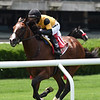 Decorated Invader wins the 2020 Pennine Ridge Stakes at Belmont Park    <br /> Coglianese Photos/Chelsea Durand