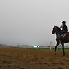 A horse goes out to train in the early morning fog at Belmont Park Friday June 19, 2020 in Elmont, N.Y. Photo by Skip Dickstein