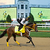 King Guillermo at Churchill Downs Monday, Aug. 31, 2020. Photo: Anne M. Eberhardt