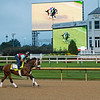 Art Collector at Churchill Downs Monday, Aug. 31, 2020. Photo: Anne M. Eberhardt