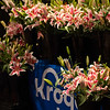 Kroger sponsored lillies for Oaks day. Scenes on Oaks day at Churchill Downs, Louisville, KY on September 3, 2020.