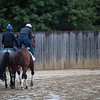 Excession heads to the track at the Pimlico Race Course Friday Oct 2, 2020 in preparation for Saturday's 145th Preakness Stakes.in Baltimore, MD.  Photo by Skip Dickstein