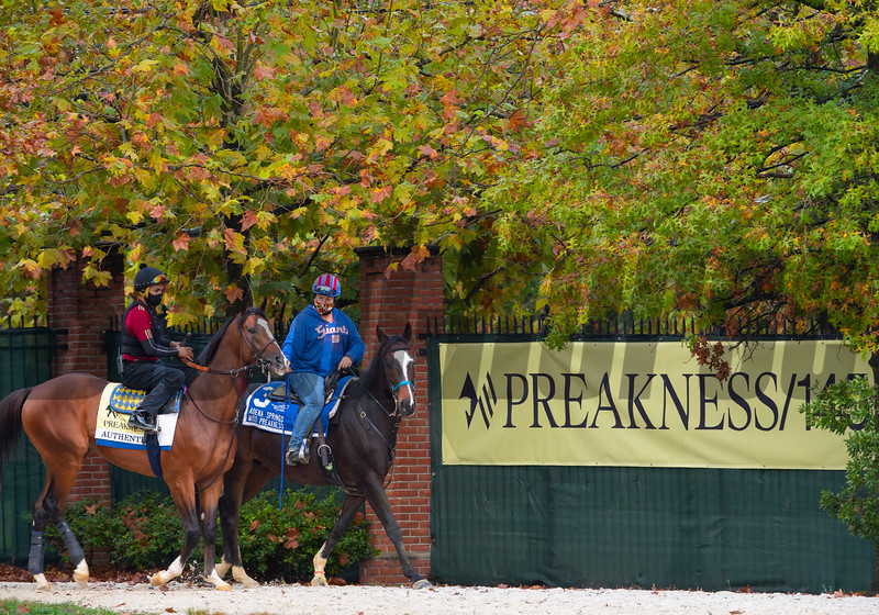 Authentic heads to the track at the Pimlico Race Course Friday Oct 2, 2020 in preparation for Saturday's 145th Preakness Stakes.in Baltimore, MD.  Photo by Skip Dickstein