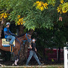 Mr. Big News heads to the track at the Pimlico Race Course Friday Oct 2, 2020 in preparation for Saturday's 145th Preakness Stakes.in Baltimore, MD.  Photo by Skip Dickstein