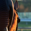 A horse is light by the early sun on track at the Pimlico Race Course Thursday Oct 1, 2020 .in Baltimore, MD.  Photo by Skip Dickstein