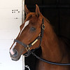 Like the King arrived at Churchill Downs on April 27, 2021. Photo By: Chad B. Harmon