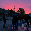 Mandaloun<br /> Kentucky Derby and Oaks horses, people and scenes at Churchill Downs in Louisville, Ky., on April 23, 2021.