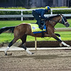 Mandaloun work<br /> Kentucky Derby and Oaks horses, people and scenes at Churchill Downs in Louisville, Ky., on April 24, 2021.