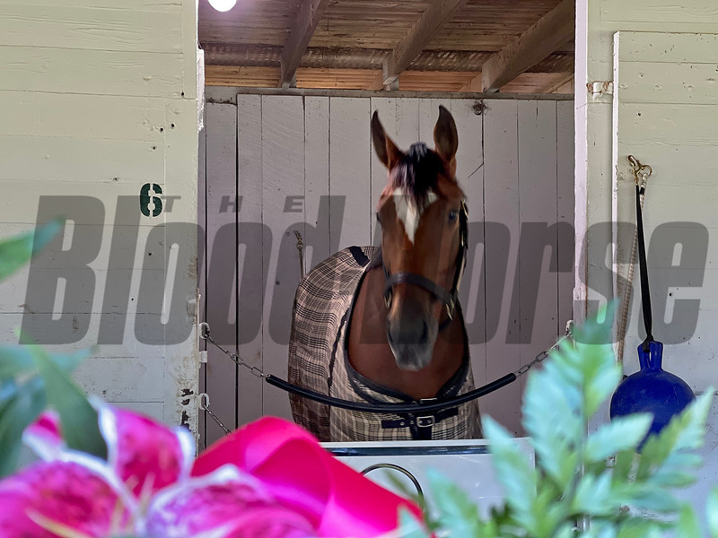 Malathaat the morning after winning the Kentucky Oaks (G1).